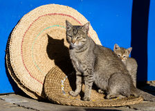 Mother cat and its kitten stock photography