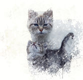 Mother Cat with its Kitten Watercolor Stock Photos