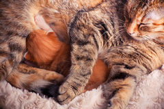 Mother cat and kitten Royalty Free Stock Photography