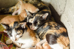 Mother cat and kitten Royalty Free Stock Photos