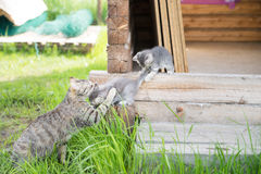 Mother cat with kitten on grass background Royalty Free Stock Image