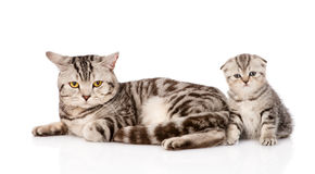 Mother cat with kitten. isolated on white background Royalty Free Stock Photos