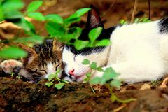 Mother cat and kitten sleeping together stock images