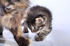 Mother cat and kitten walking Stock Photo