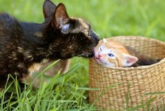 Mother cat and kitty Stock Photos