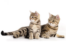 Mother cat and the little kitten stock image