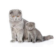 Mother cat little and kitten sitting together. isolated on white. Background Royalty Free Stock Image