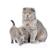 Mother cat and little kitten sitting together. isolated on white Royalty Free Stock Image
