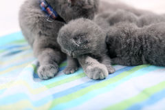 Mother cat and newly born kitten Stock Images