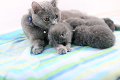 Mother cat and newly born kitten Royalty Free Stock Image
