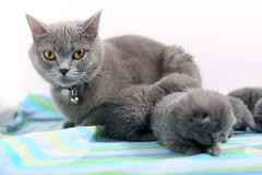 Mother cat and newly born kitten Stock Photography