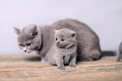 Mother cat taking care of her baby Royalty Free Stock Images