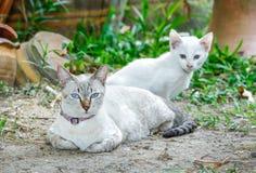 Mother cat Royalty Free Stock Photos