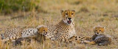 Mother cheetah and her cubs in the savannah. Kenya. Tanzania. Africa. National Park. Serengeti. Maasai Mara. Royalty Free Stock Image