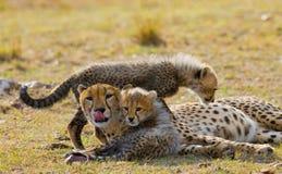 Mother cheetah and her cubs in the savannah. Kenya. Tanzania. Africa. National Park. Serengeti. Maasai Mara. Stock Photo