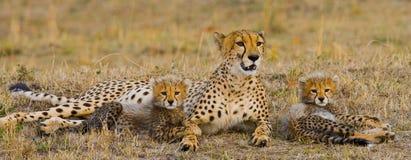 Mother cheetah and her cubs in the savannah. Kenya. Tanzania. Africa. National Park. Serengeti. Maasai Mara. Royalty Free Stock Photos