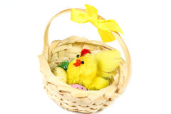 Mother chicken with eggs in basket Royalty Free Stock Photo