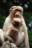 Mother and child. A monkey mother hugging her baby Royalty Free Stock Images