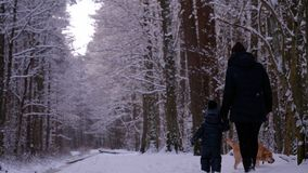 A mother with a child and a dog Labrador walks through the woods, in winter royalty free stock image