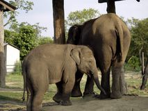 Mother and Child Elephant Royalty Free Stock Images
