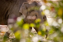 Mother and child elephant. Stock Photo