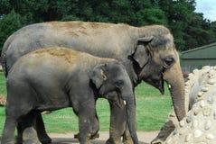 Elephant joke Stock Photography
