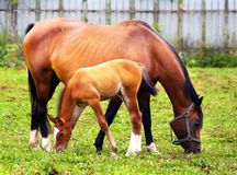 Mother & child grazing stock images