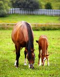 Mother & child grazing Royalty Free Stock Photos