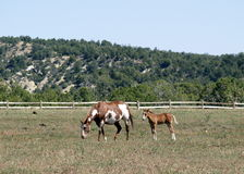 Mother and child horses Royalty Free Stock Photos