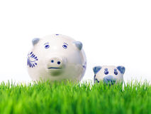 Mother and child miniature pigs on fresh grass Stock Image