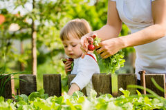 Mother and child picking up radishes Royalty Free Stock Images