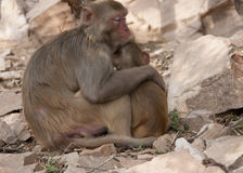 Mother and child in protective gesture. Together outside India's Jaipur. Lovely scene where mother comforts and cares of her little child stock image
