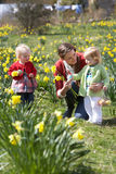 Mother And Children In Daffodil Field Stock Image