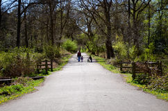 Mother and children on a road. A mother and two children walking on a road in a forest surrounding. Great for articles on health and nature benefits Royalty Free Stock Photography