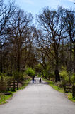 Mother and children on a road. A mother and two children walking on a road in a forest surrounding. Great for articles on health and nature benefits Royalty Free Stock Image