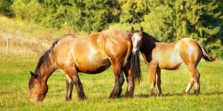 Mother and chlid grazing Stock Photo
