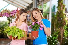 Mother and daughter buy plants in the garden center. Mother and daughter buy plants together for the apartment in the garden center stock photos