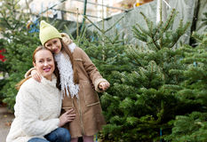 Mother and daughter choose tree Stock Photography