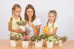 Mother and daughter consider and watering houseplants Royalty Free Stock Photos