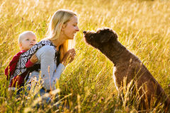 Mother, daughter and a dog in a meadow. Young mother with her daughter and dog resting in a sunny afternoon in a meadow surrounded by golden light and high grass Stock Images