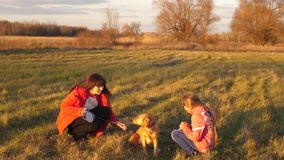 Mother, daughter and dog strolling on field, girl stroking hand dog, happy family walks with family pet