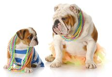 Mother and daughter dogs Stock Photography