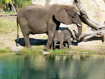 Mother and Daughter Elephants Royalty Free Stock Photography