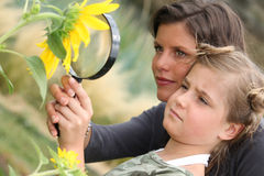 Mother and daughter examining sunflower Stock Image