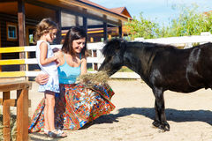 Mother and daughter are fed with straw ponies on the farm. Stock Image