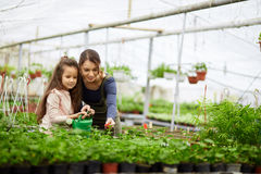 Mother And Daughter Growing Plants Stock Image