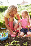 Mother And Daughter Harvesting Radish On Allotment Royalty Free Stock Images