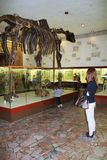 Mother and daughter looking at the exhibits in the Museum of Paleontology. Stock Image