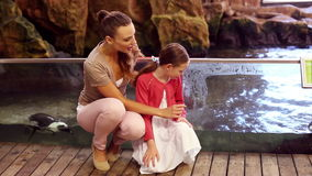 Mother and daughter looking at penguins. At the aquarium stock video footage