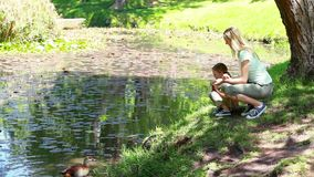 Mother and daughter nourishing ducks. In a park stock footage